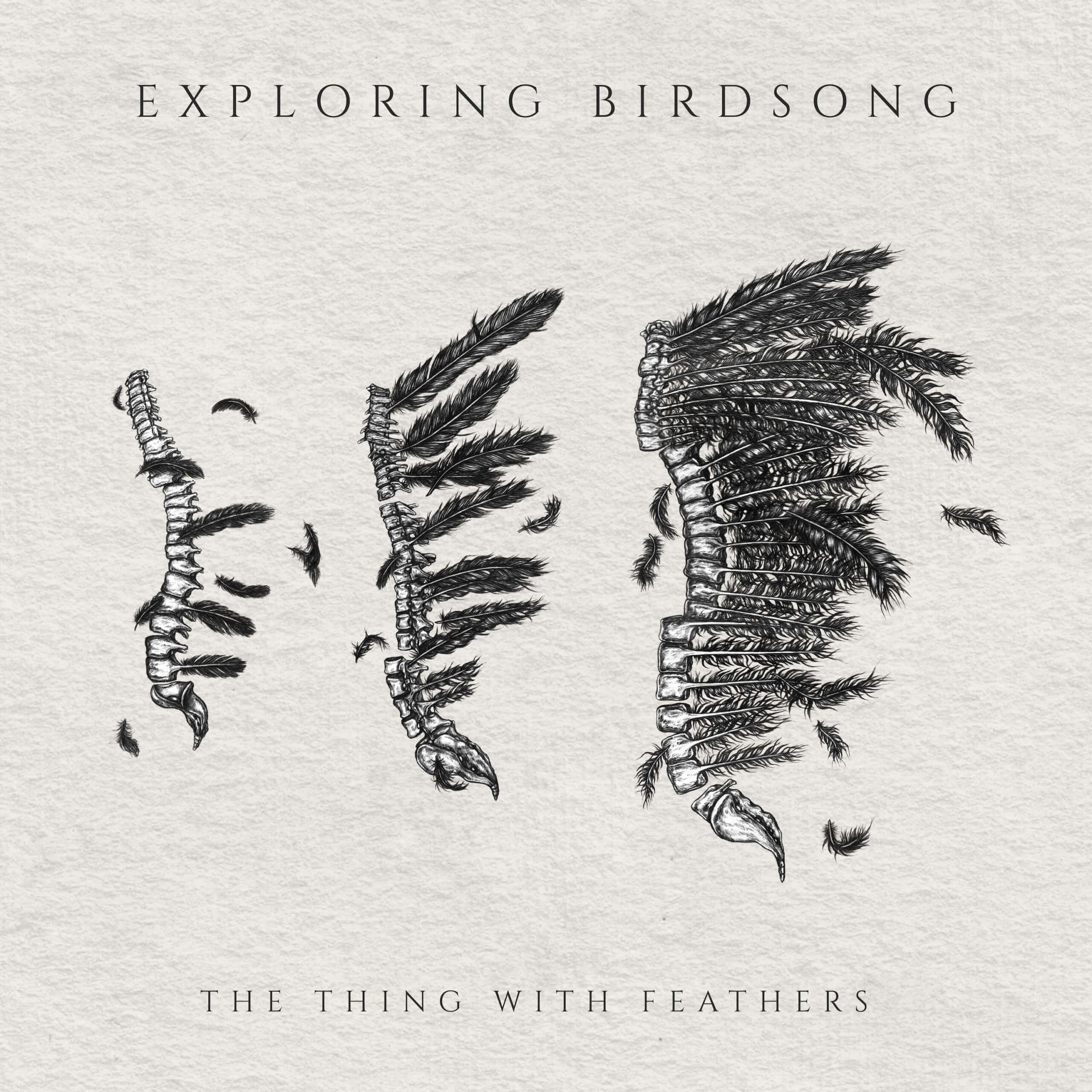 Exploring Birdsong